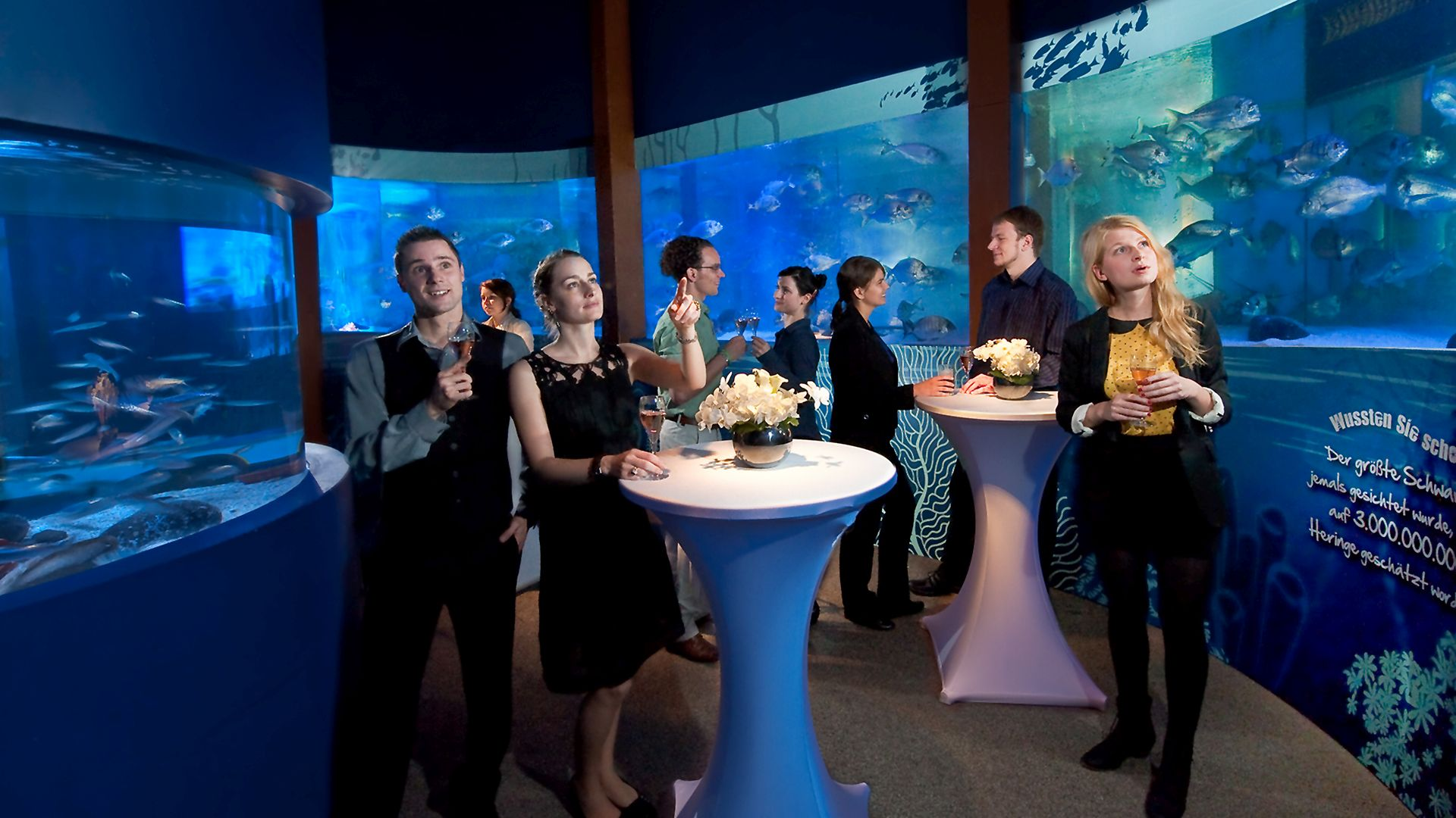 AquaDom & SEA LIFE Berlin - Up to 50 persons - fiylo
